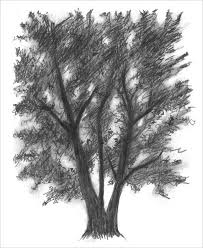 Tree drawing by Rebecca Edwards inspired by Myoung Ho Lee s photograph