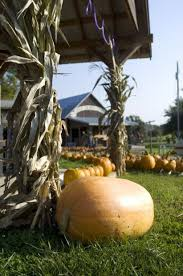 Roca Pumpkin Patch Lincoln by Fall Family Fun A Roundup Of Pumpkins Patches Mazes And More