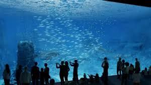 aquarium geant a visiter belgique nausicaa la baie vitrée du futur aquarium géant est arrivée