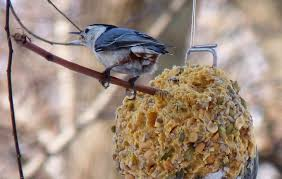 DIY How to Make Suet Winter Bird Feeders