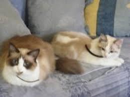 mon fait pipi sur le canapé promo mon fait pipi sur le canapé canapé design