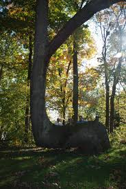 Trail Trees - Wikipedia Expert Claims Mysterious Bent Trees Were Secret Native Americans Crooked Forest Wikipedia Stp77089 Greenery And Tree Trunks In Forest Karjat Mahashtra Indian Bent Trees History Or Legend Show Me Oz Larry The Lorry More Big Trucks For Children Geckos Garage New Trucks Bodies Equipment Trailers Seen At Wasteexpo How To Fix A Leaning Tree I Love The Wooden Beds Rarin To Go Ford Mysterious Are Actually American Trail Markers Wind Stock Images 542 Photos Bend Diamonds Ieee Spectrum Black White Alamy