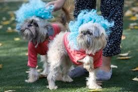 Tompkins Square Halloween Dog Parade by Best Annual Pet Events For Families In New York City