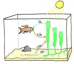 ph aquarium eau douce aquarium eau de mer recifal debuter conseils amenagement decor