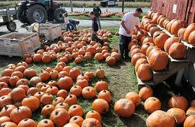 Tims Pumpkin Patch by Fall And Halloween Activities And Attractions In Central New York