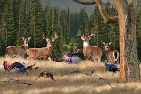 Tag HD Whitetail Deer Wallpapers Backgrounds And Pictures For Free
