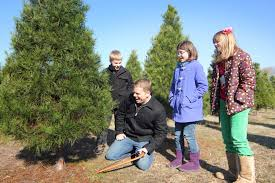 Types Of Christmas Trees To Plant by Wonderland Christmas Tree Farm