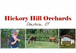 Pumpkin Farm In Palos Hills by Apple Picking At Hickory Hill Orchards In Cheshire Ct Ct Mommy Blog