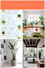 luftreinigende pflanzen die top 10 luftreinigende