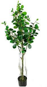 de kinlang eukalyptus bonsai simulation grüner