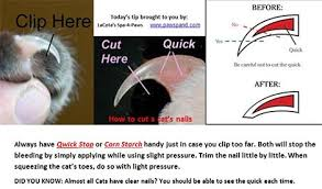 the no fear way to trim your cat s nails vetbabble