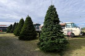 Silvertip Christmas Tree Orange County by Christmas Tree Prices Up Amid Shortage This Holiday Season