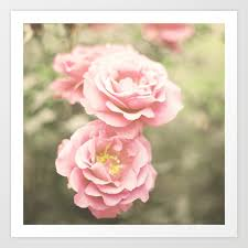 Haze Roses Retro And Vintage Flower Photography Art Print