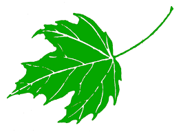 Green Maple Leaf Clipart