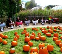 Pumpkin Picking Places In South Jersey by Top Pumpkin Patches And Farms For Long Island Kids Mommypoppins