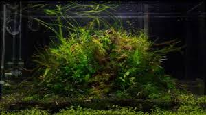 Tutorial Aquascape Step By Step | 60cm Nature Aquarium Tank Moss ... Awesome Aquascaping Gallery Iiac European Aquascape Channel Aquascapes Homedesignpicturewin Aquascaping Tutorial Aqurios Para Decorao Pinterest Big Tutorial Guide Continuity By James Findley The Indonesia Green Machine Ada Aquarium Acuarios Aquariums Best Of Aquascapes Fabuluxedecor Natural Iwagumi Scottish Grass Size 40x25h Lab Undergrowth Wood Tank 130l Aquadesign