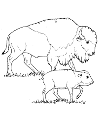 Wild Animal Coloring Page Free Printable Bison Mother And Calf Pages Featuring Buffalo Sheets