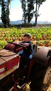 Pumpkin Patch Sacramento by Napa Pumpkin Patch Napa Ca