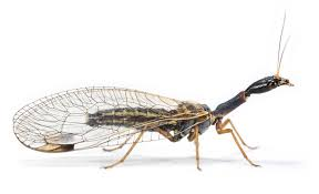 When Did Insects Evolve