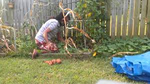 Growing Sweet Potatoes In The Backyard (part 1) - YouTube Texas Garden The Fervent Gardener How Many Potatoes Per Plant Having A Good Harvest Dec 2017 To Grow Your Own Backyard 17 Best Images About Big Green Egg On Pinterest Pork Grilled Red Party Tuned Up Want Organic In Just 35 Vegan Mashed Potatoes Triple Mash Mashed Pumpkin Cinnamon Bacon Sweet Gardening Seminole Pumpkins And Sweet From My Backyard Potato Salad Recipe Taste Of Home