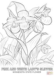 Minnesota State Flower Coloring Page