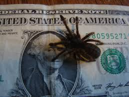 Pumpkin Patch Tarantula For Sale by For Sale 60 Species Of T Scorps Pedes Dry Goods Click For