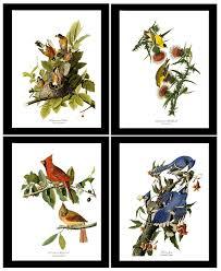 Vintage Audubon Bird Print Set