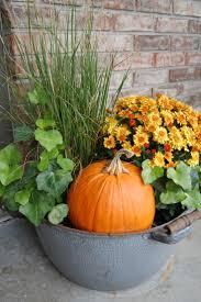Porcupine Eats Pumpkin by 22 Best Creative Pumpkins Images On Pinterest Halloween Ideas