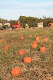 North Plains Pumpkin Patch by Here Are 19 Great Missouri Pumpkin Patches