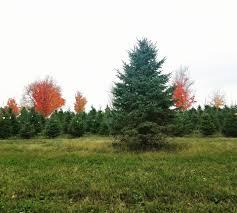 Kroger Christmas Tree Stand by Krueger U0027s Sprucegate Christmas Tree Farm Home Facebook