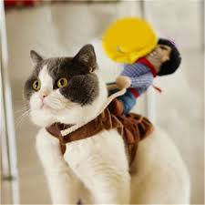 costume for cat aliexpress buy clothes for dogs jumper clothing for pets
