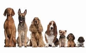 Floppy Dog Ear Template Inspirational Breed List We Ve Got Them All