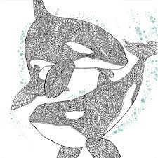 Orca Whale Free Adult Coloring Book Page FEA 2017