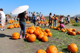 Irvine Ranch Railroad Pumpkin Patch by Best L A Area Pumpkin Patches 2017 L A Weekly