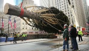 Christmas Tree Rockefeller Center 2018 by New York U0027s Iconic Rockefeller Christmas Tree Will Be Used For Homes