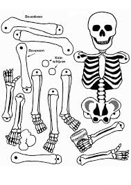 All Human Bones In Anatomy Coloring Pages