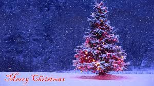 Christmas Tree Cataract Images by Saberpoint December 2015