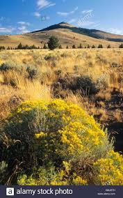 rd bureau rangeland along pine mountain rd prineville district bureau of