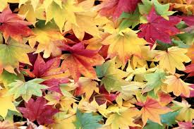 Colorful Autumn Leaves Wallpaper 1999x1333