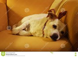 Lying Sad Dog On The Armchair Stock Image - Image: 70635581 Faux Suede Pet Fniture Covers For Sofas Loveseats And Chairs Comfort Research Big Joe Bagimals Dawson The Dog Bean Bag Armchair Shih Tzu Lap On The Stock Photo Image 350298 Dog Cat Chamomile Amazoncom Sure Fit Quilted Throw Sofa Slipcover Taupe King Sitting His Throne 1018169 Shutterstock Antique Asian Chair Chinese Export Wood Carved Dragon Lion Foo Me My Dogcat Fold Out Bed With Protector Available In Dogs Amazoncouk Boxer Destroyed A Leather Armchair Alone At Home Damaged Hound Buttonback Occasional Loaf