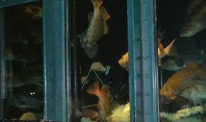 THE DEER Undersea Gardens in Newport Oregon