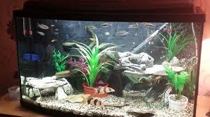 large aquarium rocks for sale stacking rocks in your aquarium ratemyfishtank