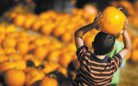Cal Poly Pomona Pumpkin Patch Promo Code by 100 Cal Poly Pumpkin Festival Promo Code Cpp Pumpkin