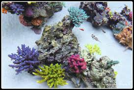 The Iwagumi Reef - Blog Coral Wonders Is This Aquascape Ok Aquarium Advice Forum Community Reefcleaners Rock Aquascaping Contest Live Rocks In Your Saltwater Post Your Modern Aquascape Reef Central Online There A Science To Live Rock Sanctuary 90 Gallon Build Update 9 Youtube Page 3 The Tank Show Skills 16 How Care What Makes Great Large Custom Living Coral Aquariums Nyc