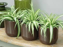 plante chambre plante chambre feng shui frais des plantes aux vertus dépolluantes