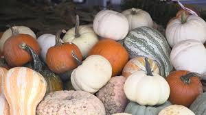 Ms Heathers Pumpkin Patch Louisiana by Pumpkin Patches To Visit This Fall Louisiana Weekend