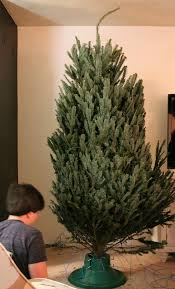 Christmas Tree Watering Funnel Canada by How To Care For A Fresh Christmas Tree Home With Cupcakes And