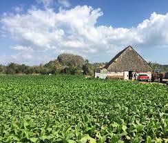 Vinales Horseback Riding Cuban Tobacco Farms Plantation