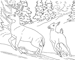 Animal Kingdom Coloring Book Deer Pages Of Real Animals In