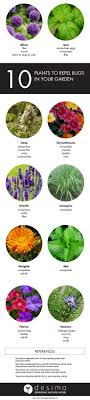 25+ Unique Plants That Repel Bugs Ideas On Pinterest | Mosquito ... 7 Tips For Fabulous Backyard Parties Party Time And 100 Flies In Get Rid Of Best 25 How To Control In Your Home Yard Yellow Fly Identify Of Plants That Repel Flies Ideas On Pinterest Bug Ants Mice Spiders Longlegged Beyond Deer Fly Control Pest Chemicals 8008777290 A Us Flag Flew Iraq Now The Backyard Jim Jar O Backyard Chickens To Kill Mosquitoes Mosquito Treatment Picture On And Fascating